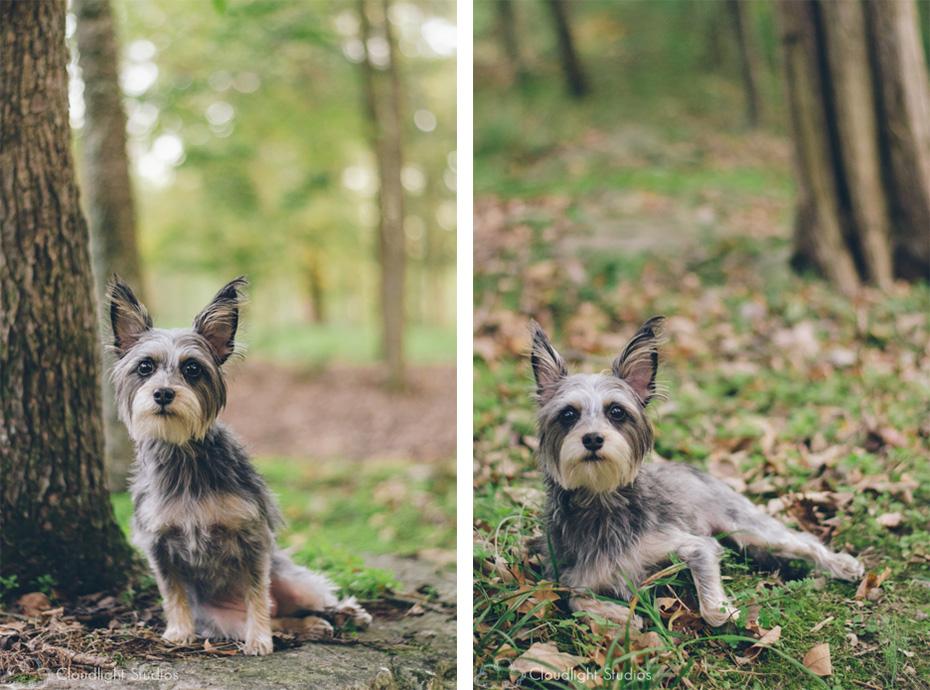 Dog Portraits Nashville, TN