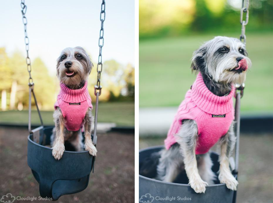Dog at Park Photos