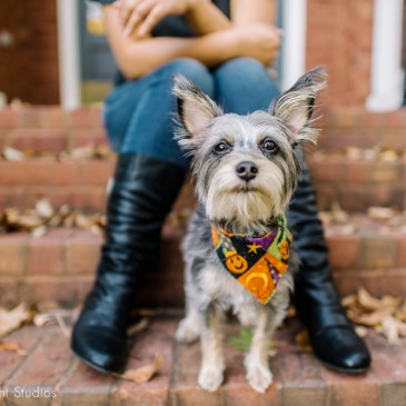 Nashville Dog Photography | Olive & Raphaela