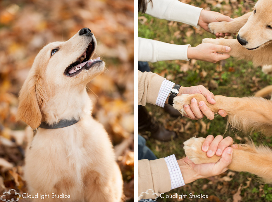 Dog Photographers in Nashville TN