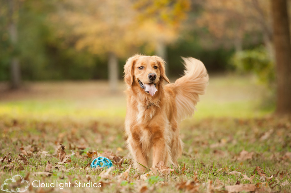 Nashville Dog Photography