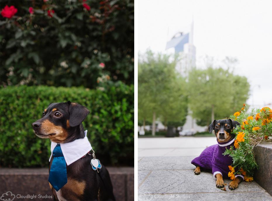 Dog Portraits in Nashville TN