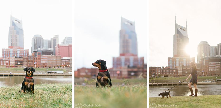Nashville Skyline Dog Photos