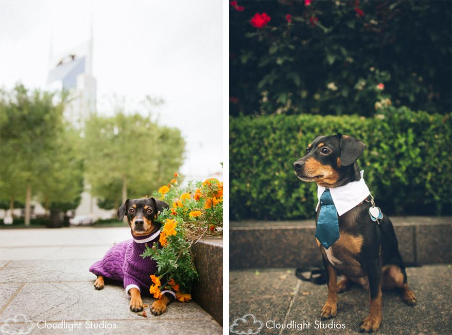 Dog Adoption Events Nashville