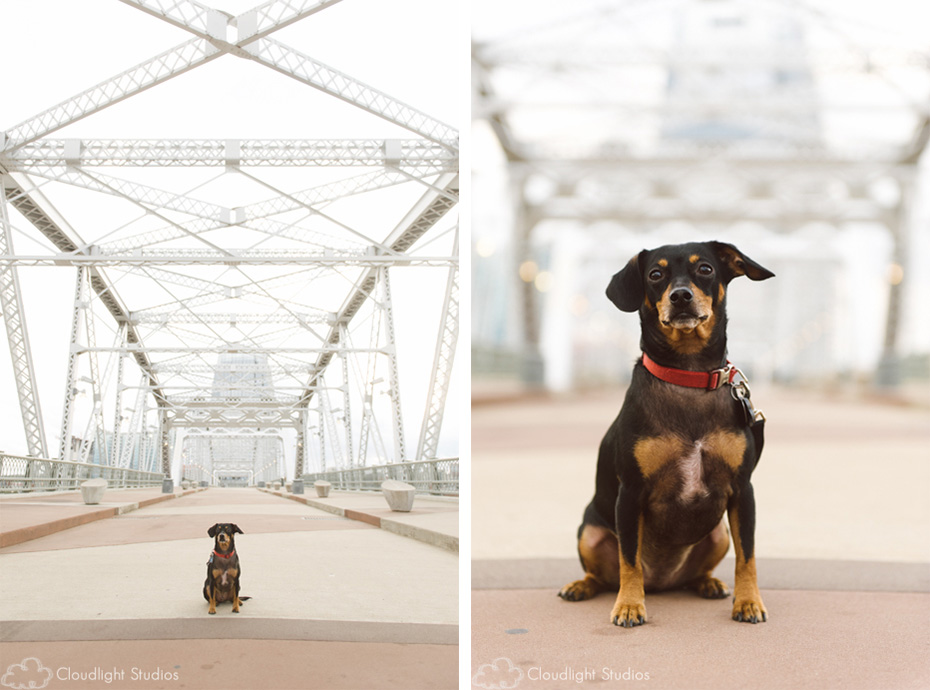 Walking Bridge Pet Photos