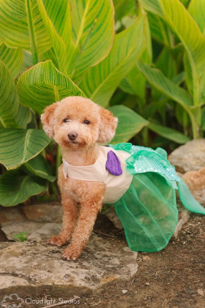 Disney-Pet-Costumes
