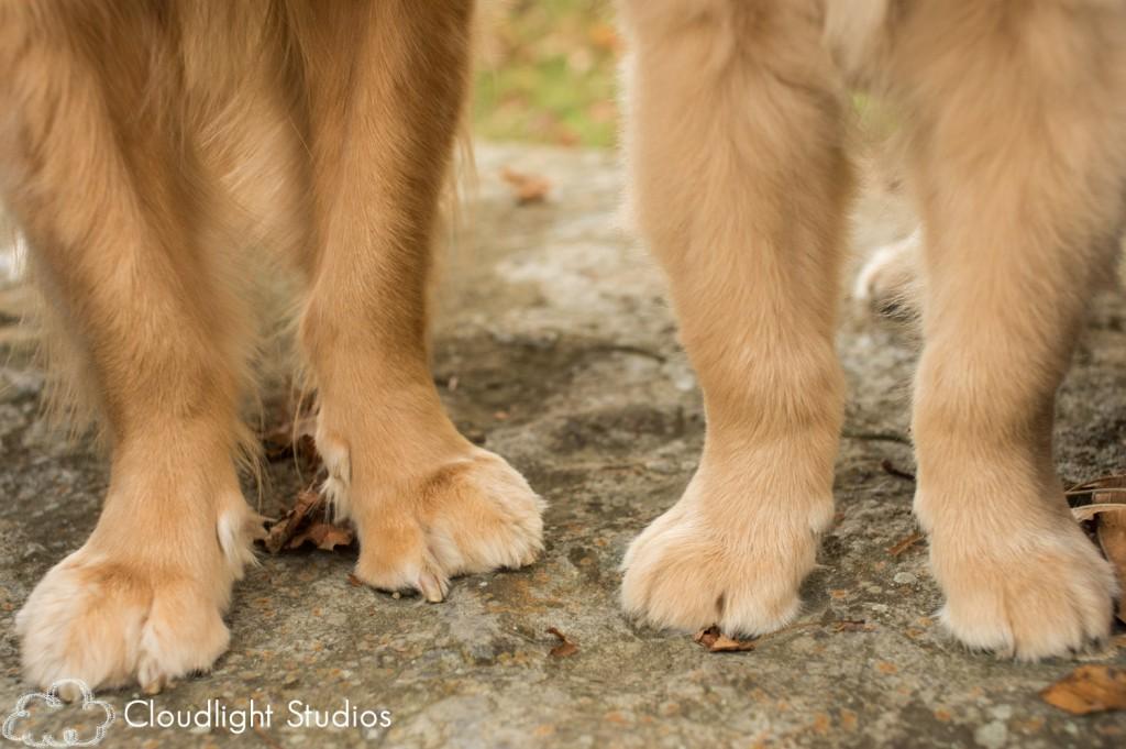 Dog-Paws-Nashville-Pet-Photos