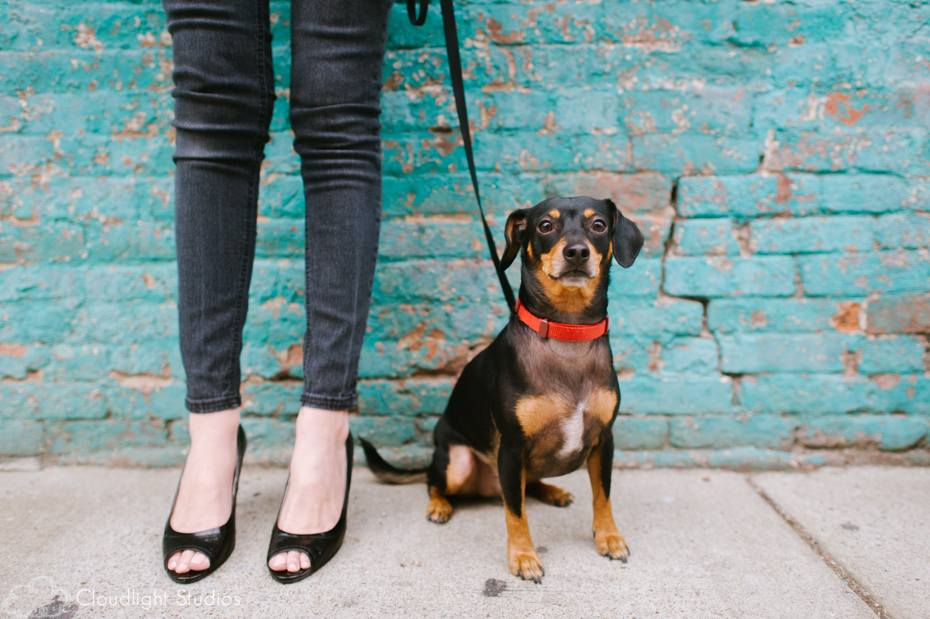 Dog Photographers in Nashville, TN
