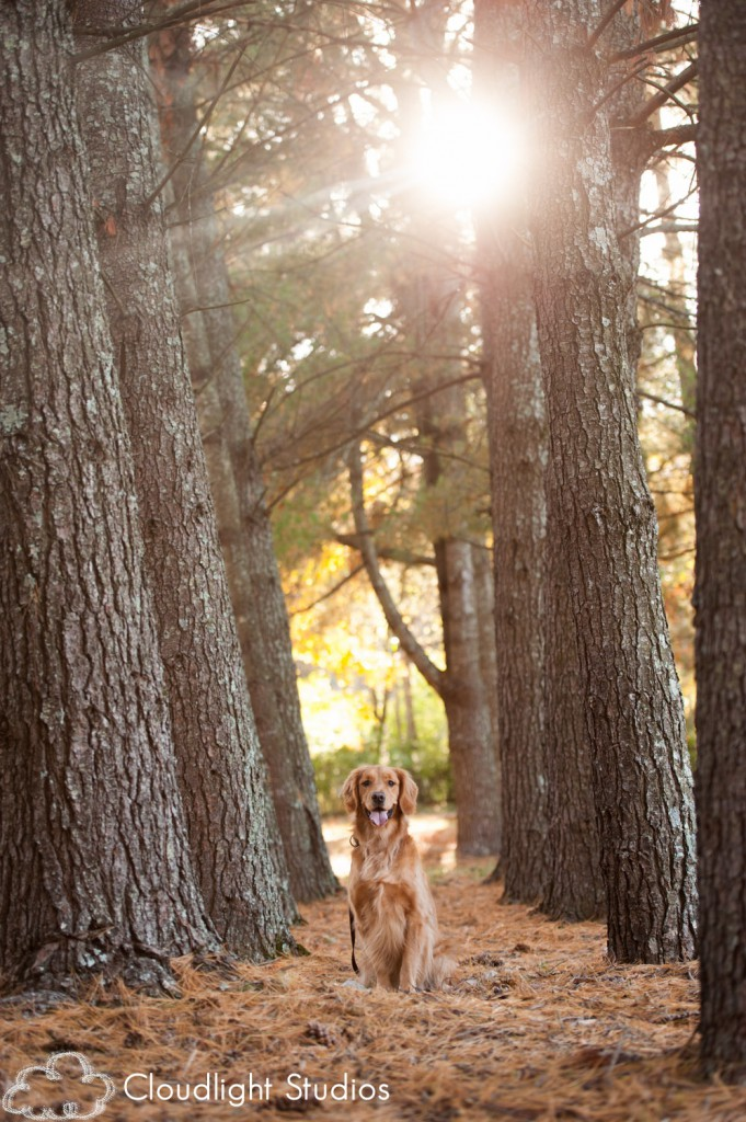 Dog-Photography-Golden-Retriever
