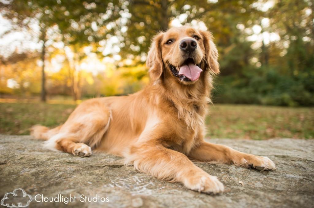 Dog-Portrait-Photographers-Nashville