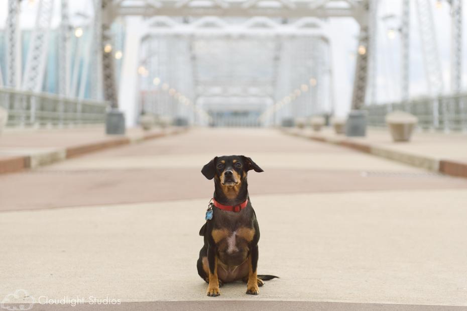 Dog on Walking Bridge in Nashville