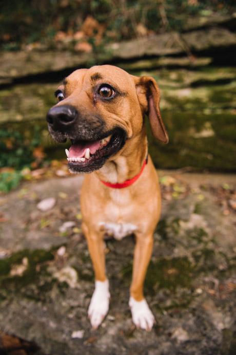 Fun-Pet-Photography-Nashville