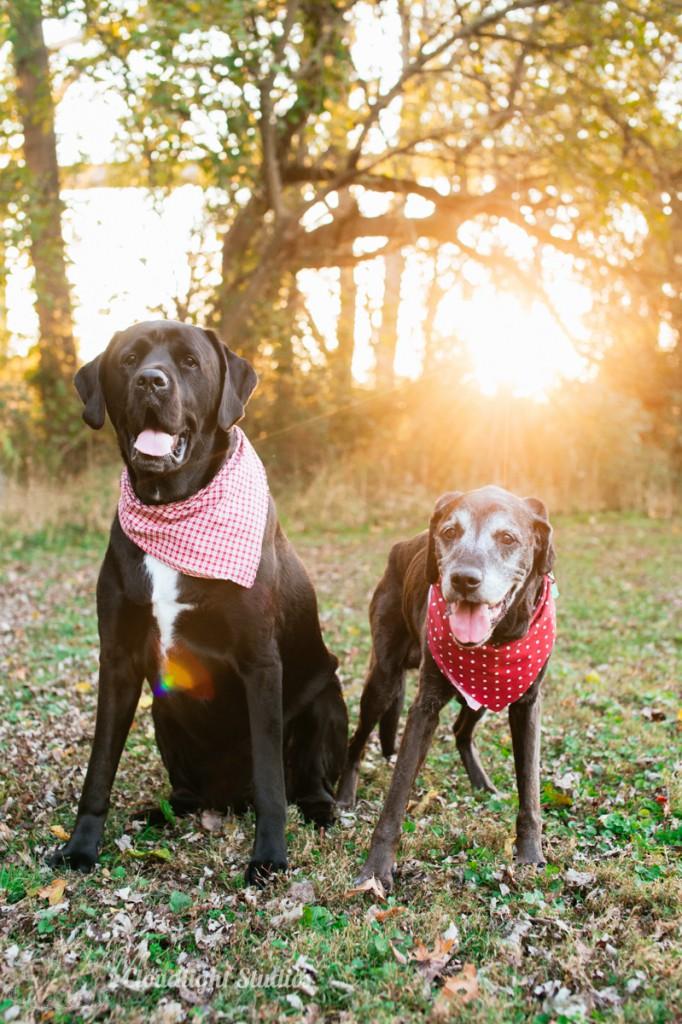 Nashville-Dog-Photographers