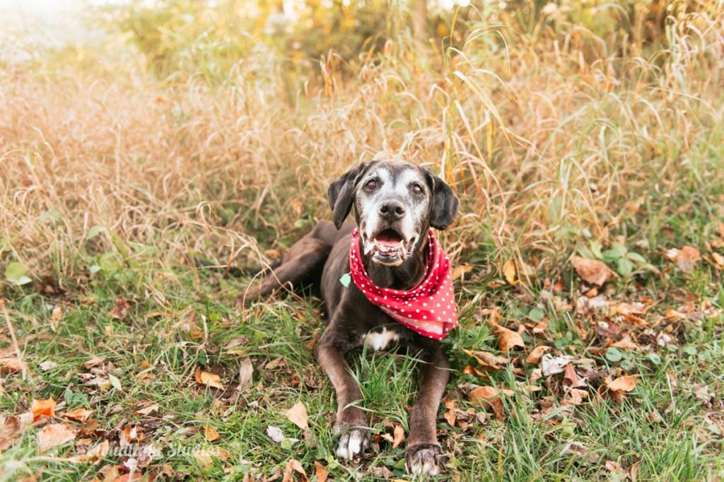 Nashville-Dog-Photography