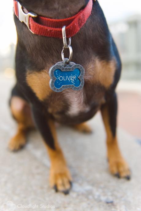 Nashville-Dog-Photos