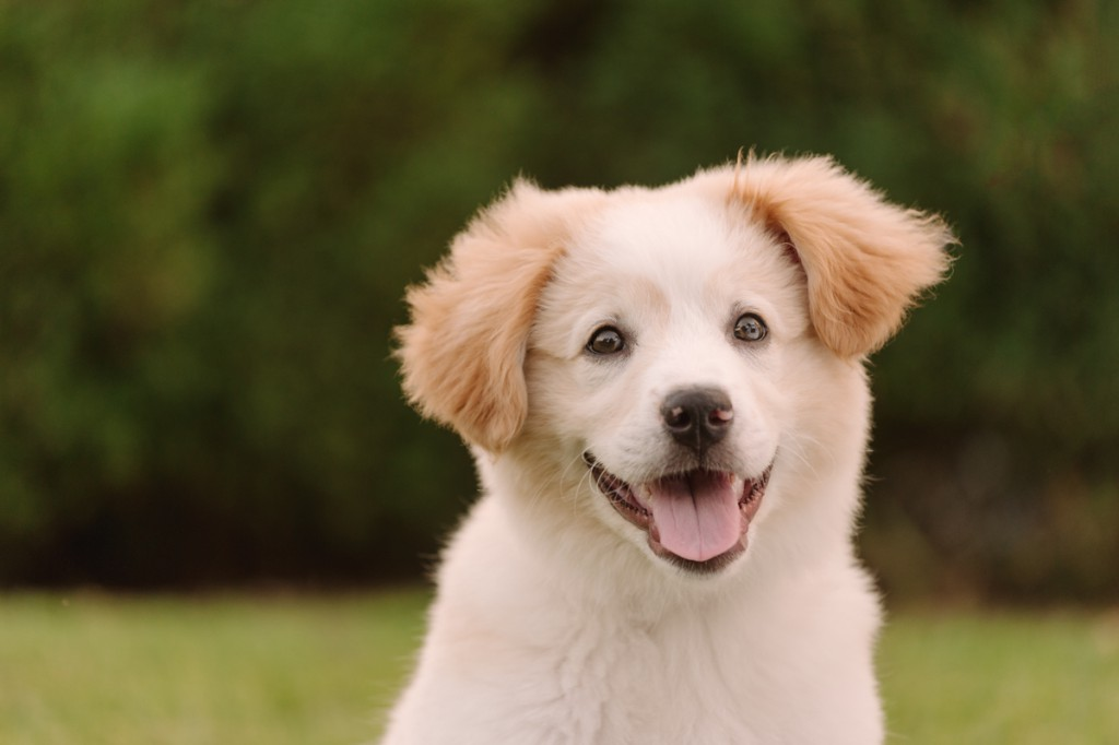 Nashville-Pet-Photography