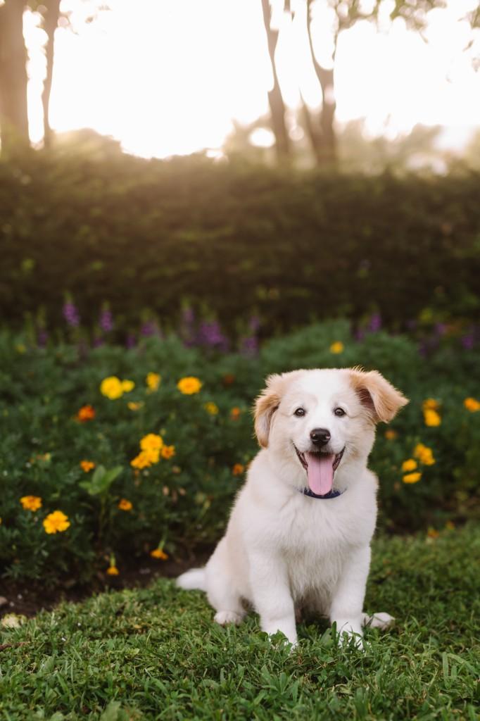 Nashville-Puppy-Photography