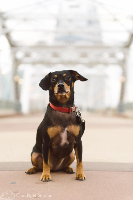 Nashville-Walking-Bridge-Dog-Photo