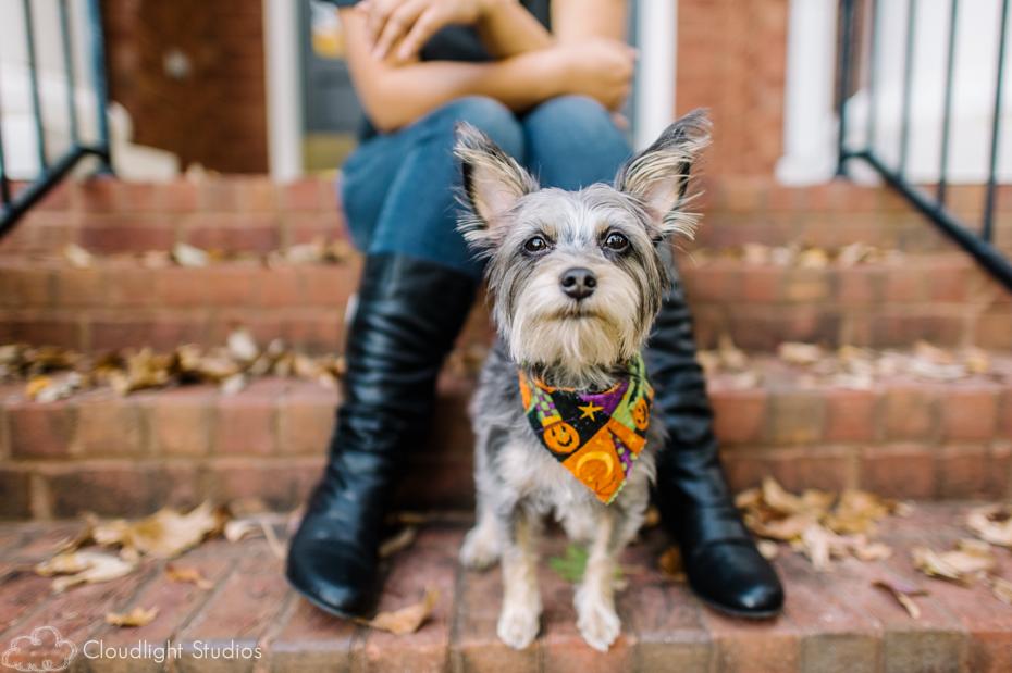 Pet-Photographers-in-Nashville-TN