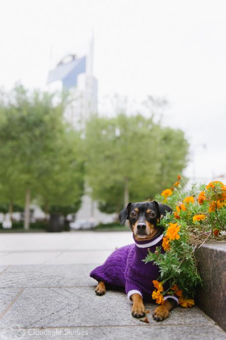 Pet-Photography-Downtown-Nashville