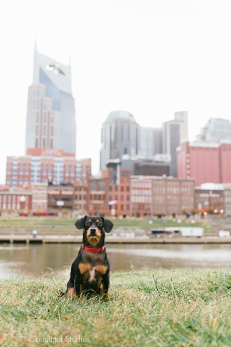 Pet-Photos-Nashville-Skyline